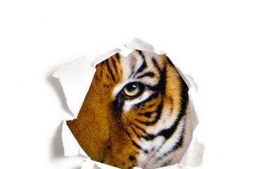 noa-tigresa