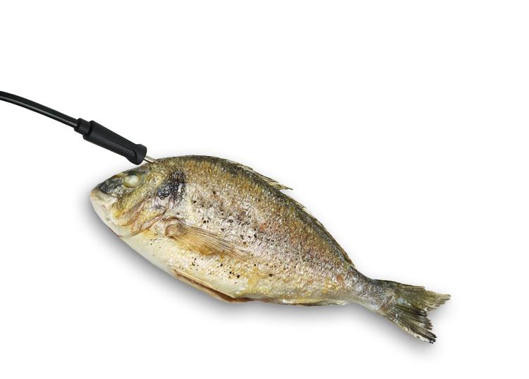 Cocinar pescado perfectamente