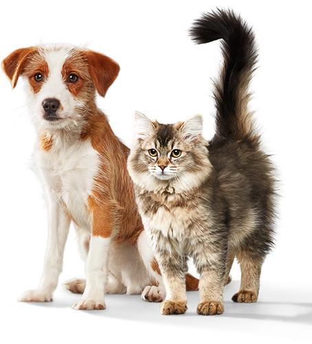 Aspirador para perros y gatos