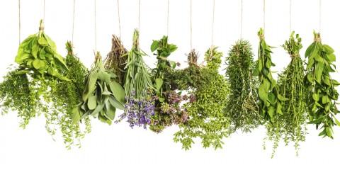 6 hierbas aromáticas para condimentar tus platos