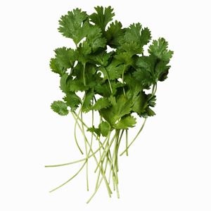 El toque pèrfecto para tu guacamole, añade cilantro