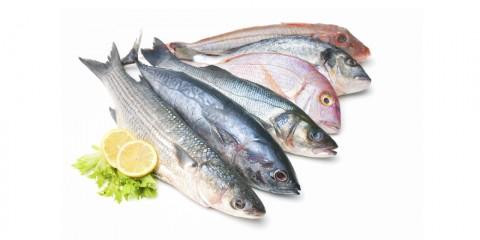 ¿Cuáles son los mejores pescados del verano?