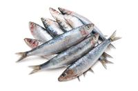 Sardinas, uno de los mejores pescados del verano