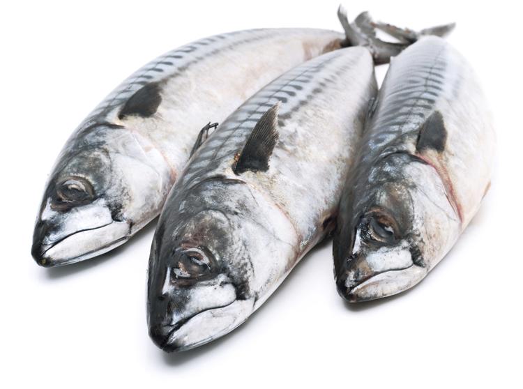 Pescado azul: un alimento para prevenir el colesterol