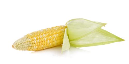 Las mazorcas de maíz son un ingrediente muy sano.